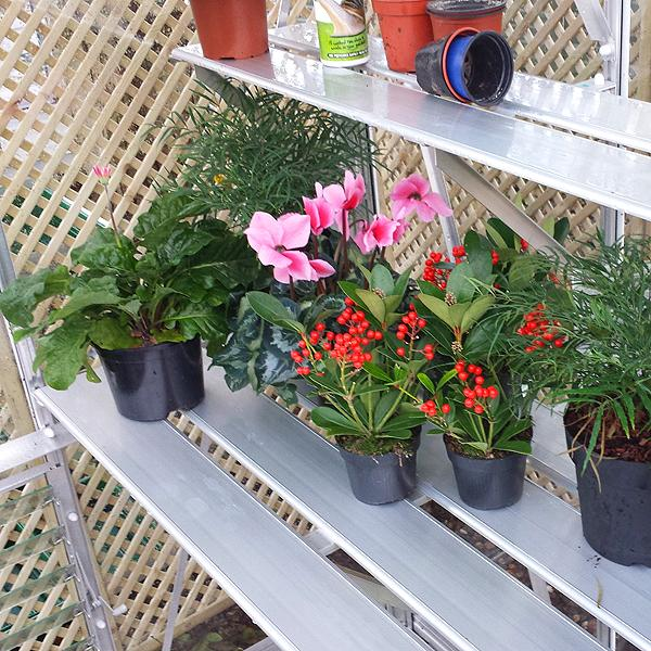 Peak Chepstow Greenhouse