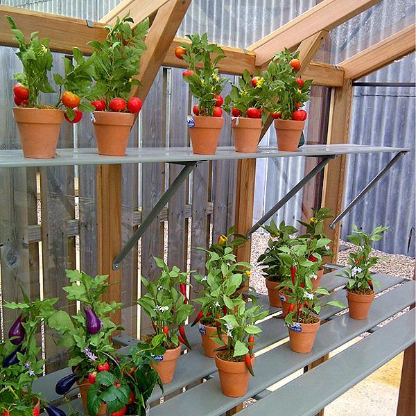 Alton Evolution SIX Greenhouse