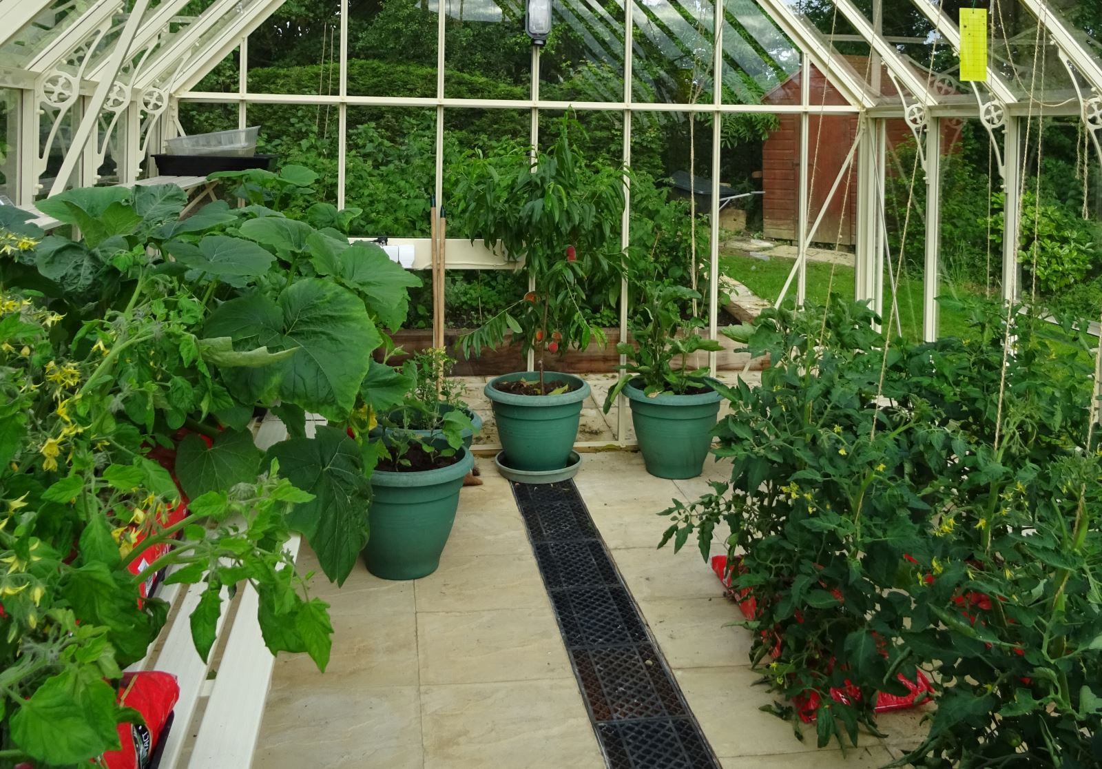 Cucumber and Tomato plants in a Robinsons Reigate greenhouse