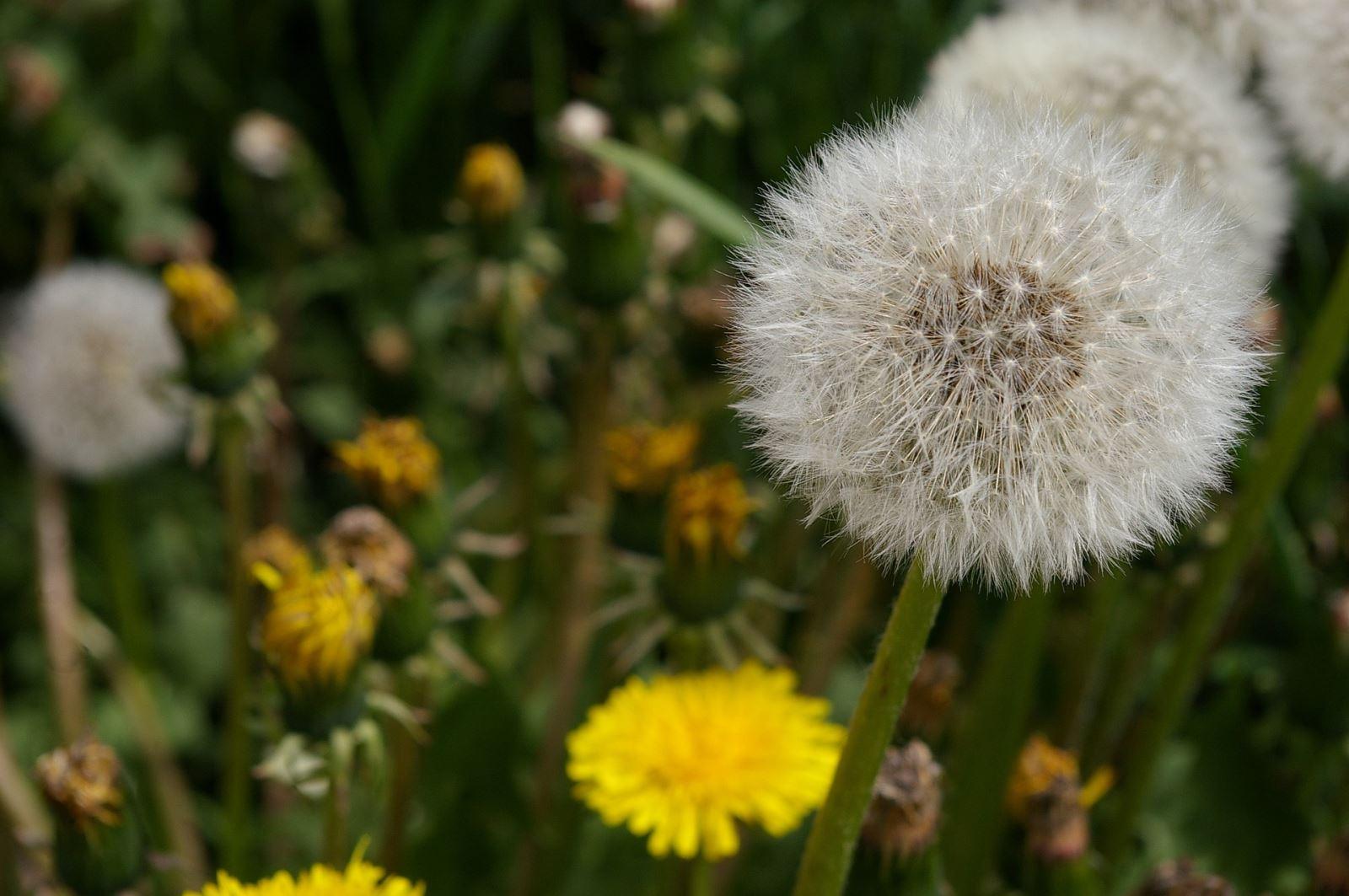 Keep weeds at bay this summer